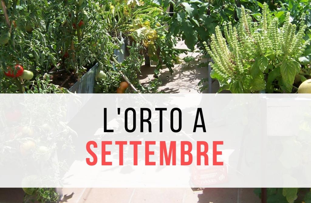L\'orto a settembre - Il Blog di Orto sul terrazzo